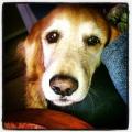 Dog Lab 08192013