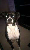 Dog Nyla sitting 08192013