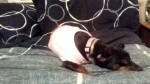 Dog Xena 08262013